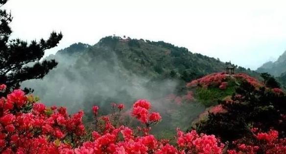 多达30多种杜鹃花开满垂直海拔2000多米的山峰,海拔虽高,花儿却开得