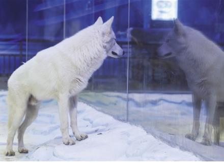 还等什么?赶紧来与极地海洋动物互动吧!